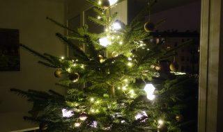 Weihnachten nachhaltig feiern mit Bio-Weihnachtsbaum