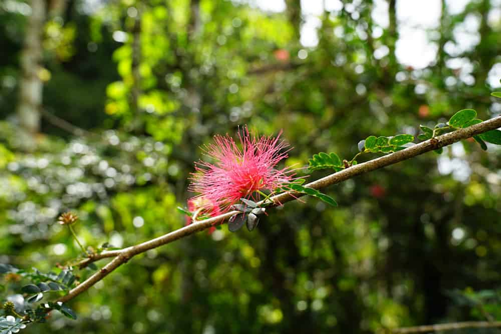 Pinke Pflanze