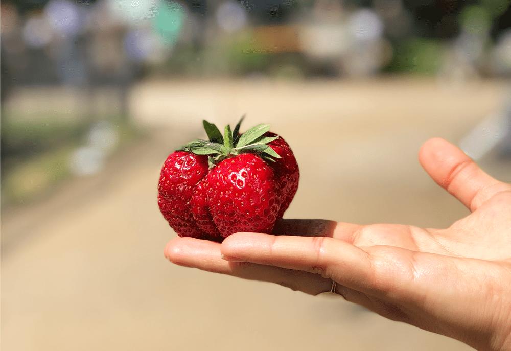 Erdbeersaison Juni